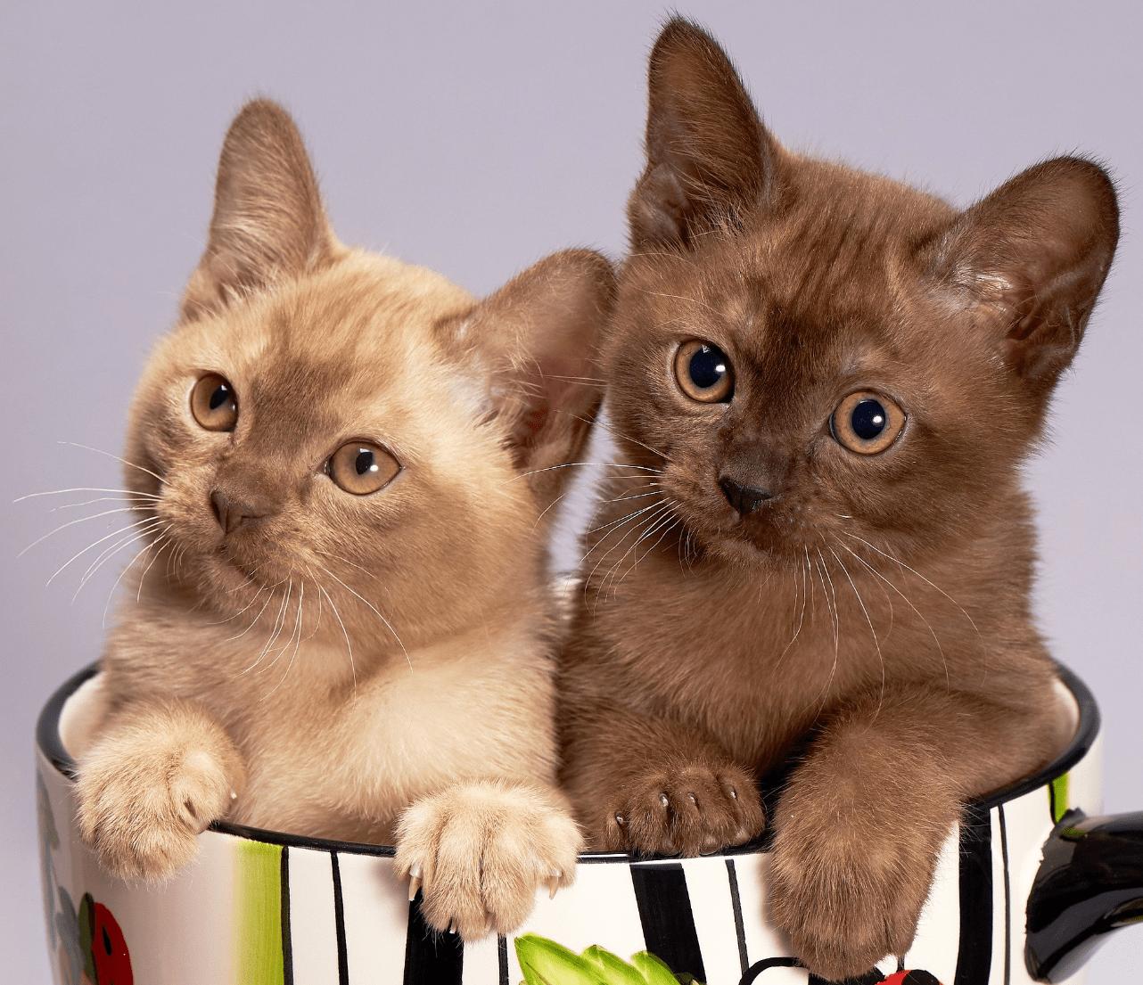 Rituels contre la fatigue physique et morale : revenons à nos chatons